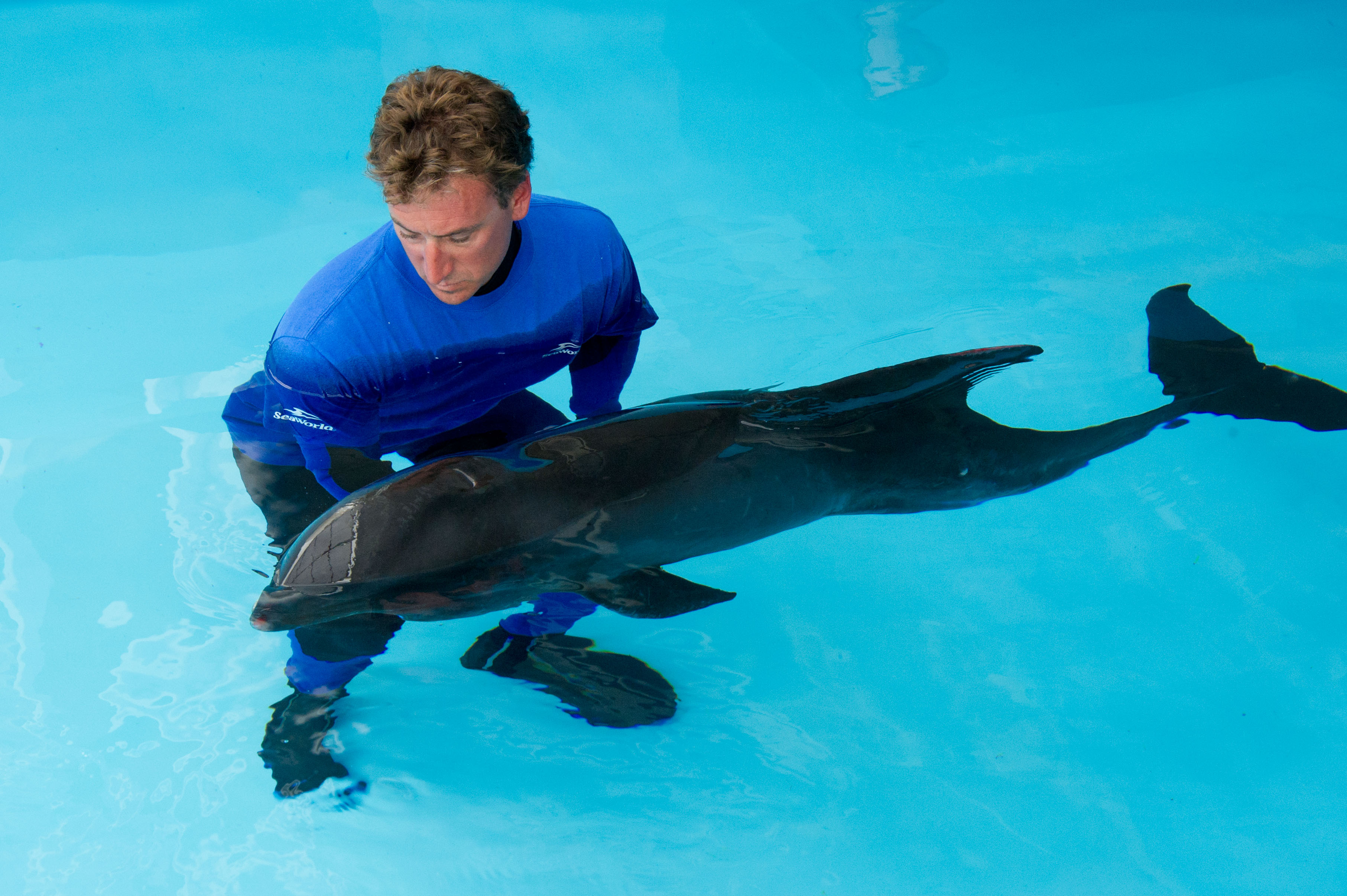 Stranded melon-headed whale being cared for by SeaWorld Orlando ...