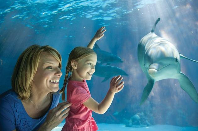 Kids Free  at seaworld