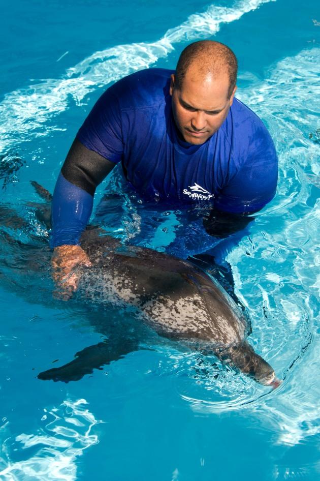 SeaWorld Dolphin