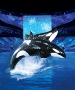 seaworld_christmas_shamu
