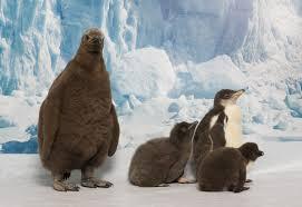 penguins seaworld