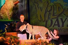 wild days jaguar at seaworld